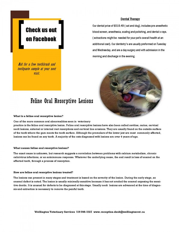 March Newletter page 2